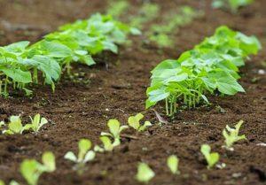 Agroecologie et sol 300x209