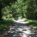 Bois de Frossay Bouguenais