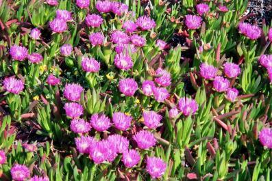 Thumbnail fleurs roses
